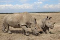 Adopt a Rhino for a rhino lover!