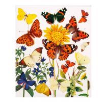 The Natural History Museum's Butterflies Greetings Card