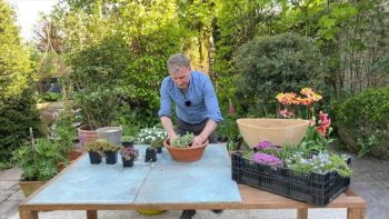Online Container Gardening Course Taught by Chris Beardshaw