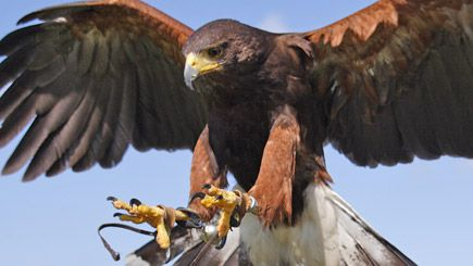Enjoy a birds of prey experience
