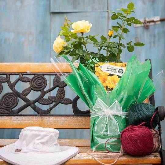 Golden 50th Anniversary Rose Gift