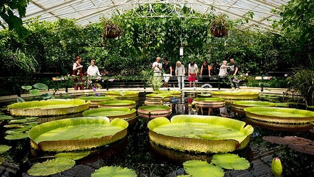 Enjoy a visit to Kew Gardens