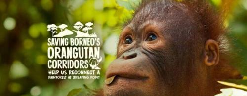 Help the World Land Trust save Borneo's orangutan corridors