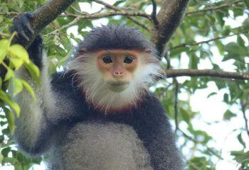 Help protect the wildlife in Vietnam