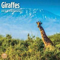 Giraffes Calendar 2022 from the CalendarClub.co.uk
