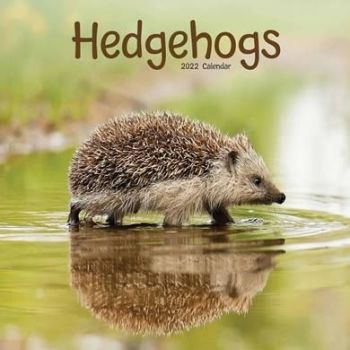 This Hedgehogs 2022 Calendar is available from CalendarClub.co.uk