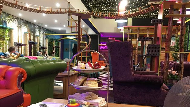 Tuck into Afternoon Tea for Two at Kitty's Cafe!