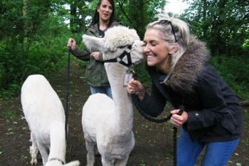 Take a stroll with the Charnwood Forset Alpacas!