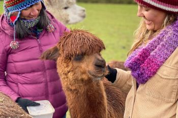 Alpaca Walking Experience for Two at Middle England Farm, Warwickshire