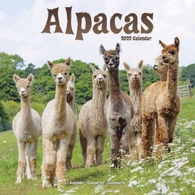 There are calendars for alpaca lovers!