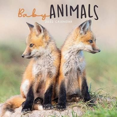For anyone who loves the young..... a Baby Animals 2022 Calendar