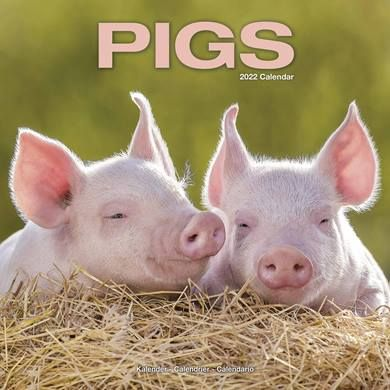 There are calendars and diaries for people who adore pigs!