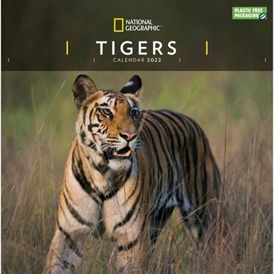 Tiger lovers will adore this National Geographic Tiger Calendar 2022