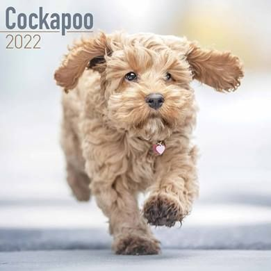 There a huge range of calendars for dog lovers covering lots of different breeds