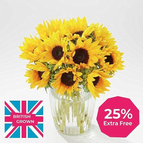 British Sunflowers + 25% extra free