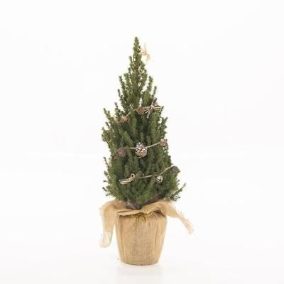 Send a mini potted Christmas Tree with Tree2mydoor.com