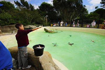 Give a penguin lover a Penguin feeding experience at Druisillas Park in Sussex