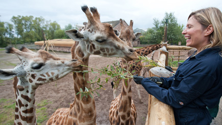 This link will take you to Red Letter Days website for info on this Giraffe Encounter & to buy it