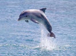 Adopt a dolphin, whale or shark
