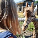 Meet the Giraffes Encounter