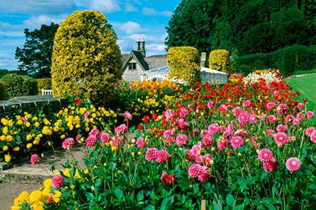 Give a garden experience day to a garden lover