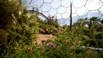 Eden Project Private Guided Rainforest Tour for Two