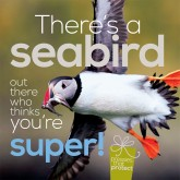 "Visit the RSPB's Online Shop to see their ""Pressies that Protect"" range"