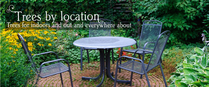 Find a tree by location - e.g. patio, balcony, small garden, conservatory... with Tree2mydoor.com