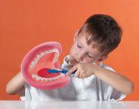 Big Mouth Demonstration Model