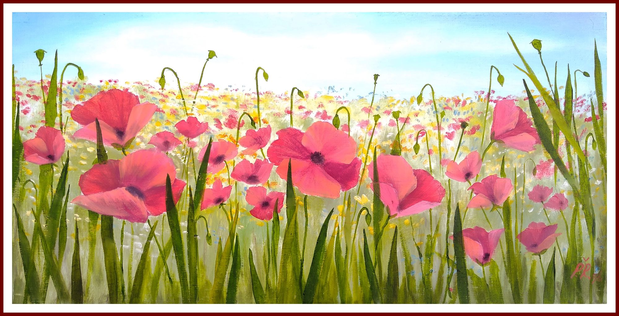 Field Poppies - bright red poppies