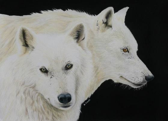 White wolves small