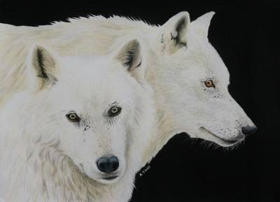 White wolves coloured pencil painting