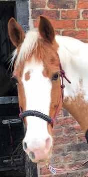 CARMENS HORSE