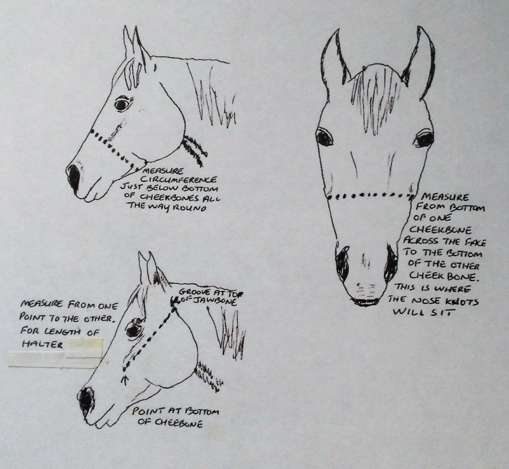 Halter measurement chart
