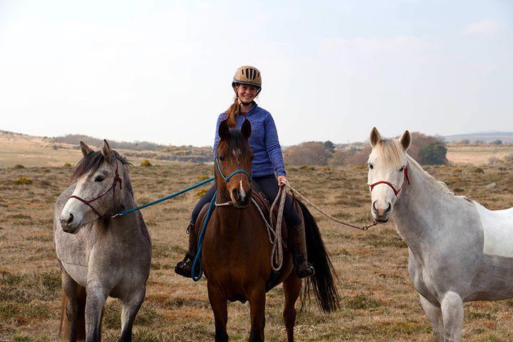 Gemmas 3 horses