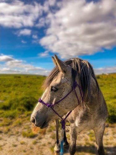 Gemmas horse 3