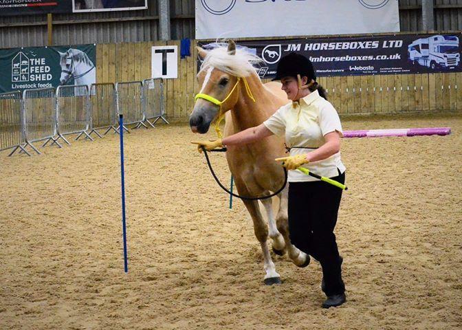Amys pony 2