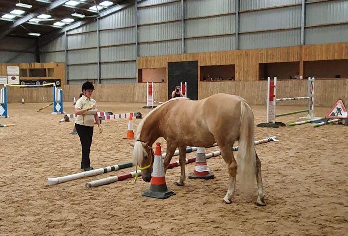 Amys pony 4