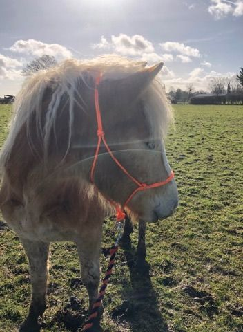 Customers pony orange halter