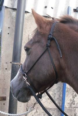 Bitless bridle/Halter Combo