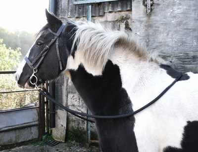 Pony Rope Reins