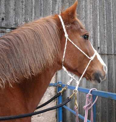 Bitless bridle low ring sidepull
