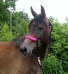 Halter with Covered Noseband