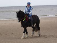 ROPE REINS FOR ENDURANCE/EVERYDAY RIDING