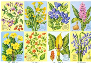 1429A- Woodland Plants Flowers Primrose Bluebell Cowslip