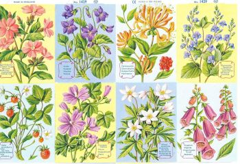 1429B - Woodland Plants Flowers Primrose Violets Honeysuckle