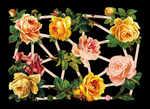 7346 - Tea Rose Roses Flowers Bouquets