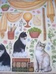 dfg 135 - Cat Kittens