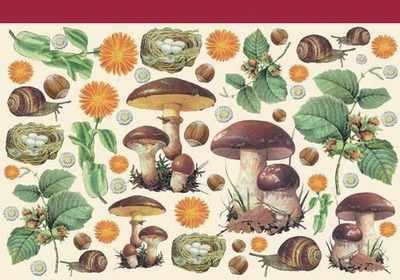 DFV003 - Mushrooms Forest Birds Eggs