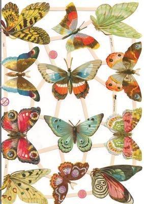 7408 Species of Butterfly
